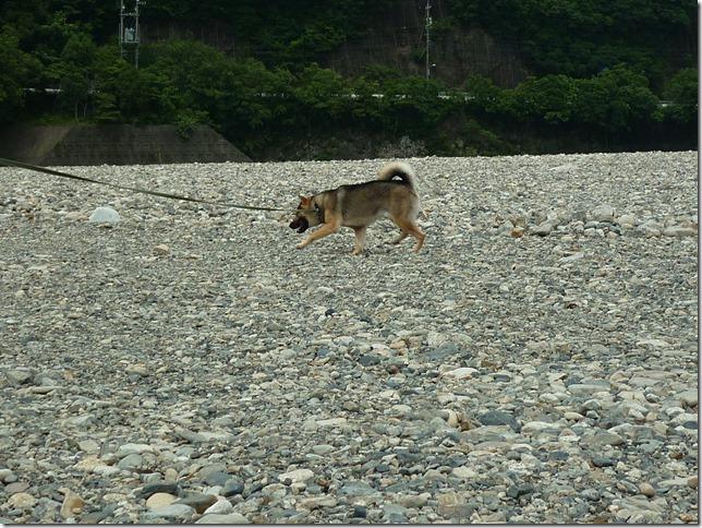 201607川遊び03-08