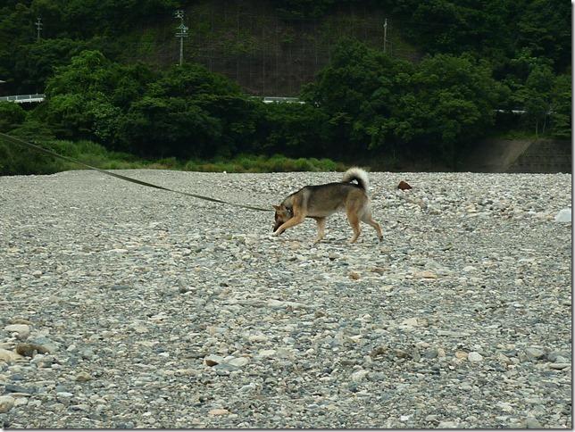 201607川遊び03-09