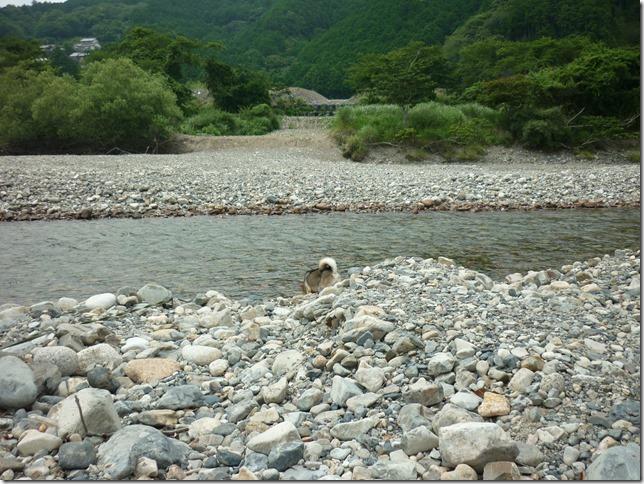 201607川遊び04-01