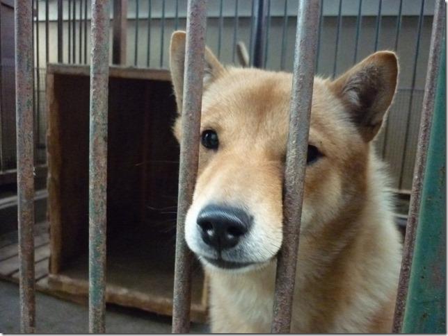 201609やっぱ北海道犬05