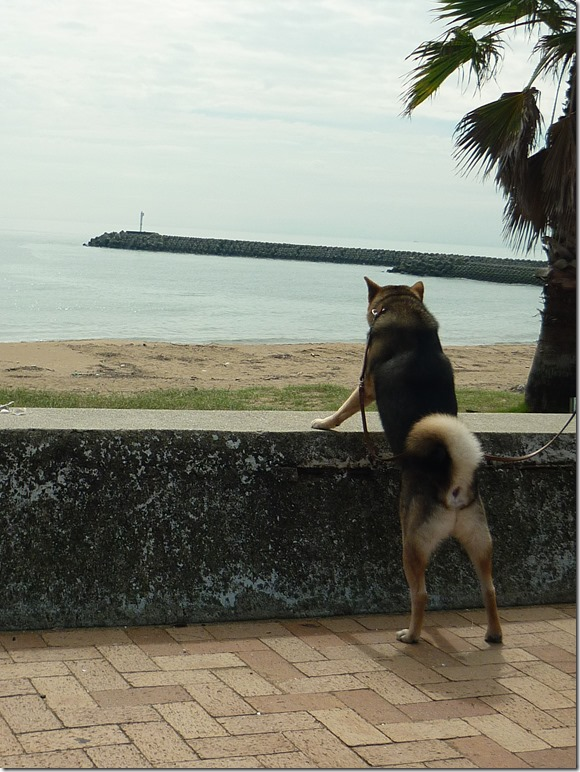 201609海散歩1-03