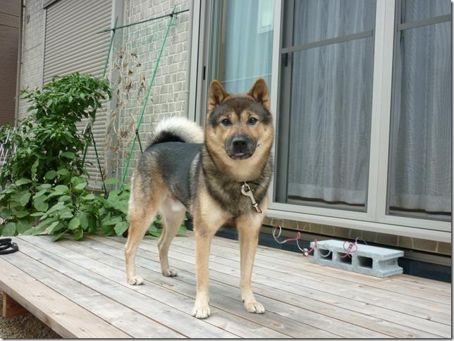 201610外犬体験03