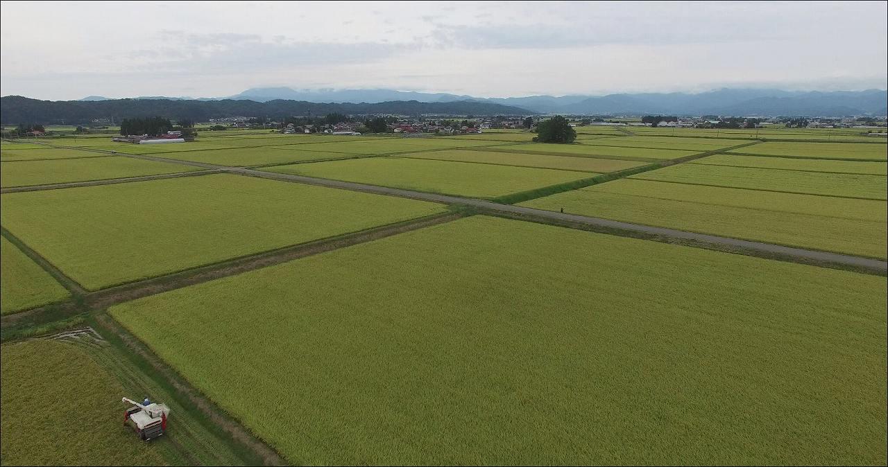 20160924稲刈り-s