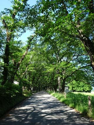 H280618桜並木