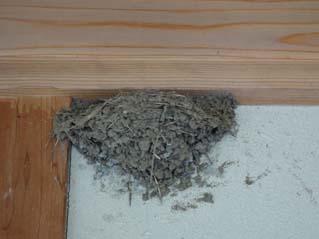 H280627ツバメの巣