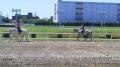 誘導馬の調教 1