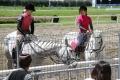 160512誘導馬の練習風景6