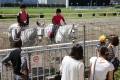 160512誘導馬の練習風景5