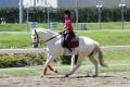160512誘導馬の練習風景2