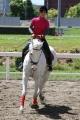 160512誘導馬の練習風景1