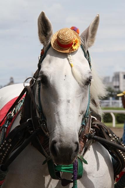 ばん馬と綱引き対決-1