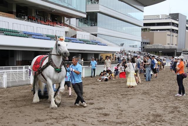 ばん馬と綱引き対決-2