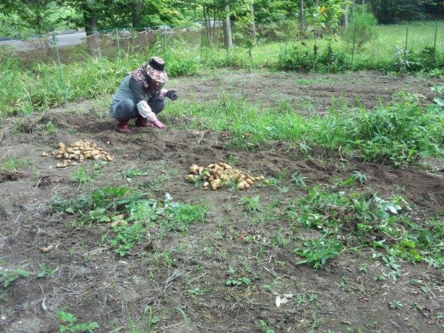 収穫中0813