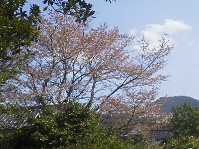 28411niwasaku (2)