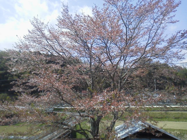 28411urasaku.jpg