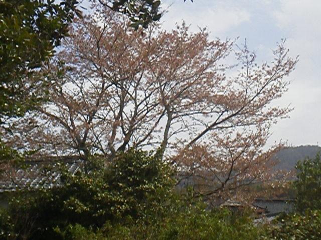28413niwasaku.jpg
