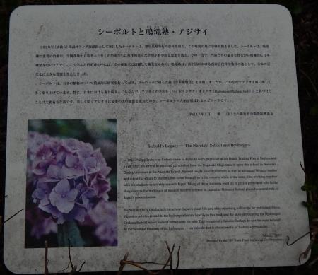 シーボルト② (1)