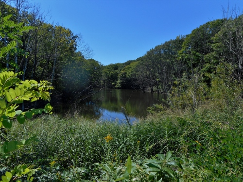 イオンの森 池
