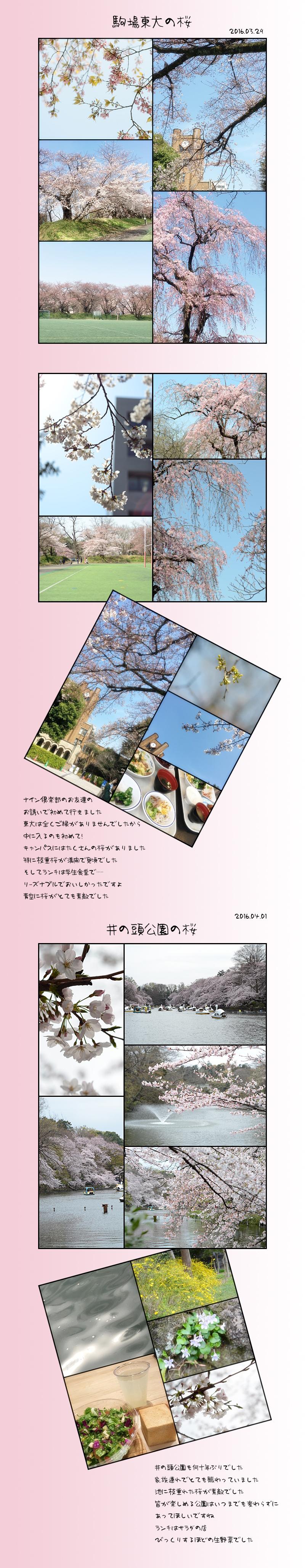 4月25日桜2