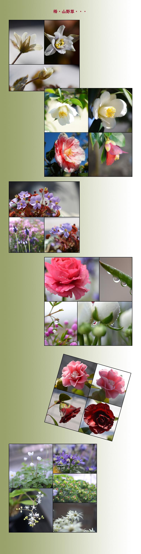 5月27日家の花1