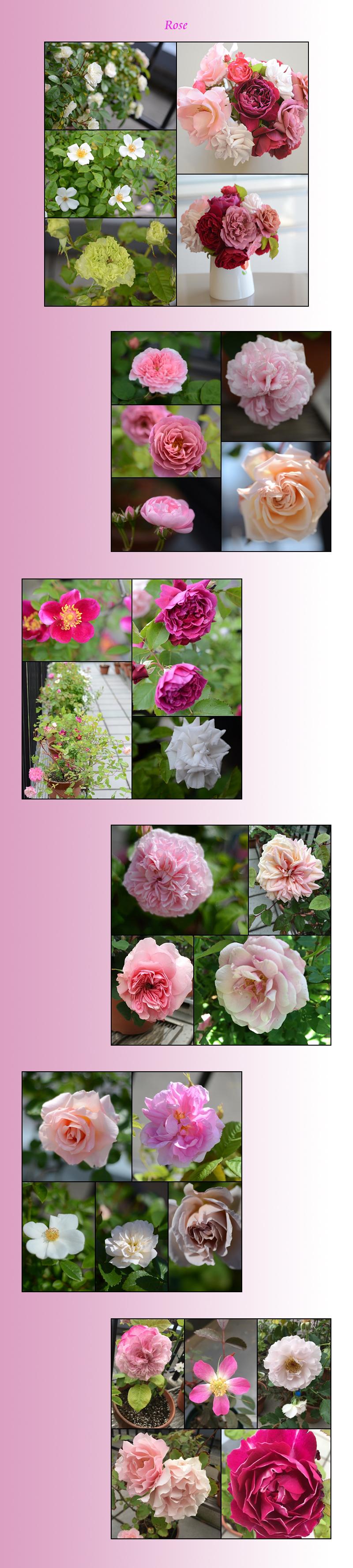 5月27日家の花2