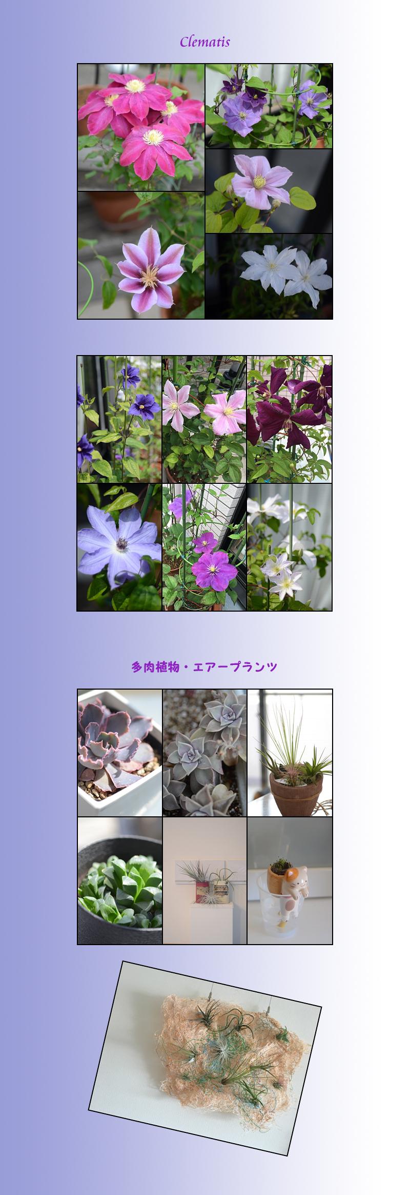 5月27日家の花3