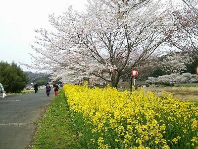 160409hitachioomiya.jpg
