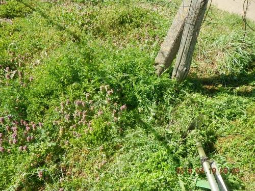 草刈り作業 (1)