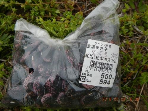 紫花豆 (1)