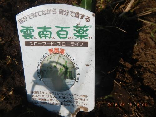 百薬草 (1)