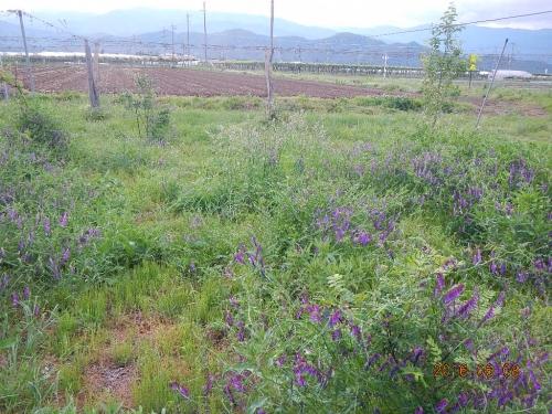 自然農場 (2)