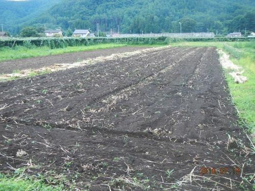 麦畑の耕起 (6)