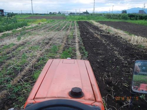 麦畑の耕起 (5)