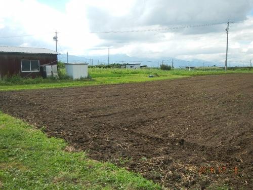 麦畑の耕起 (1)
