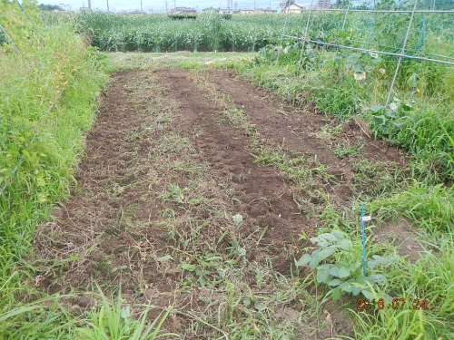 秋野菜の種まき準備 (6)
