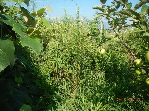 果樹園 (2)