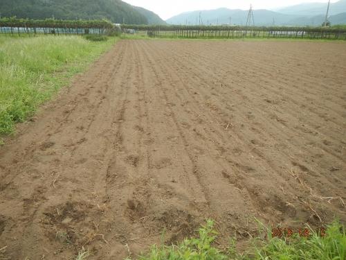 桔梗農場そば (3)
