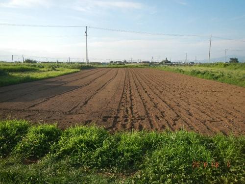北圃場蕎麦 (4)