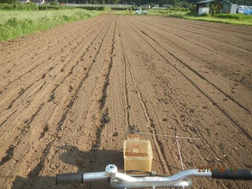 北圃場蕎麦 (3)