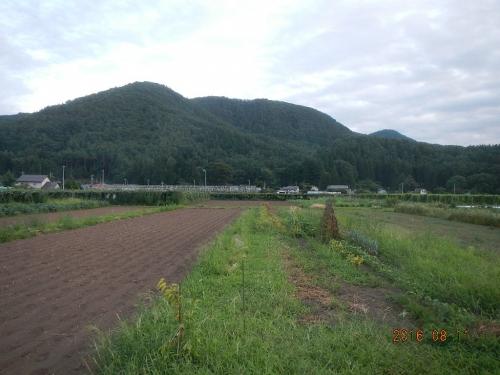 蕎麦播種 (2)