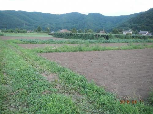 蕎麦播種 (1)