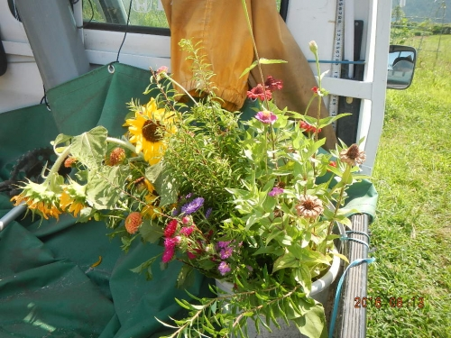 花を取りに (2)