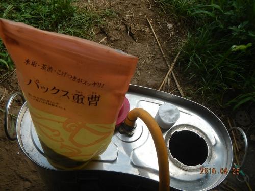 ぶどう (1)