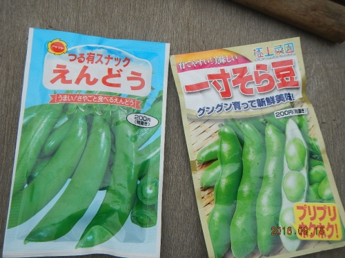 えんどう豆 (1)