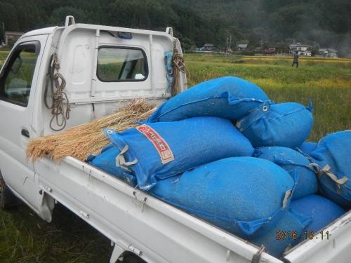 粳稲脱穀作業 (3)