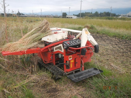 粳稲脱穀作業 (4)