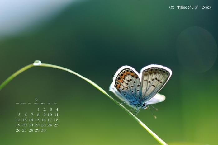 壁紙カレンダー0607