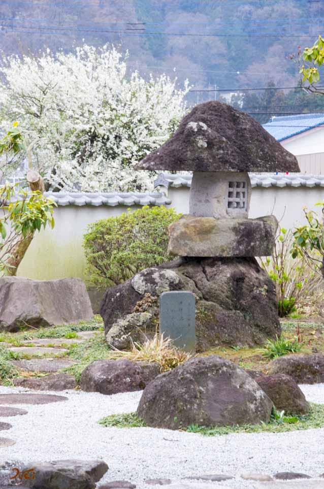 20160402桜_大間々松源寺10