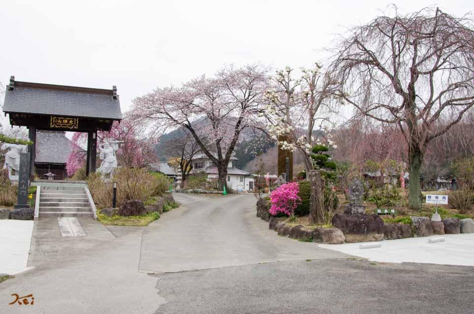 20160402桜_大間々松源寺02