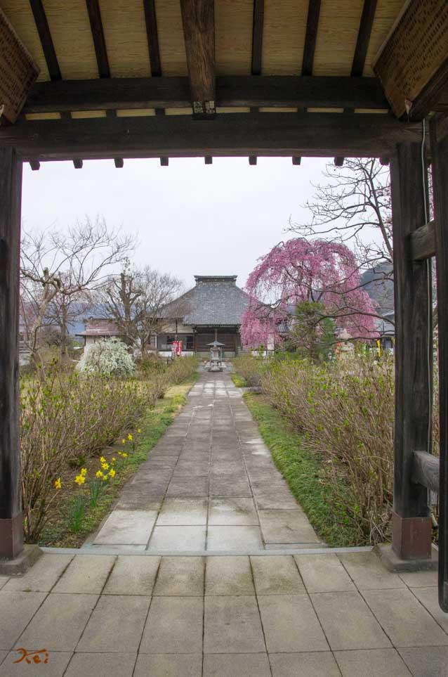20160402桜_大間々松源寺05